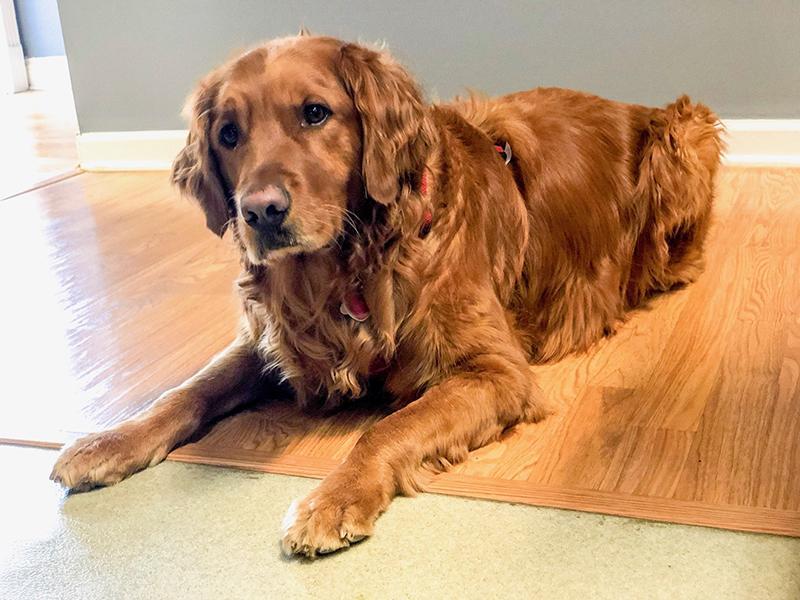 The Riley Dental Office dog Bennett